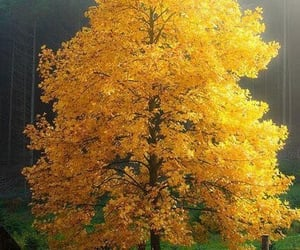 autumn, nature, and yellow image