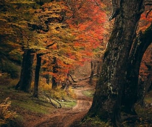 autumn colors, big trees, and fall image