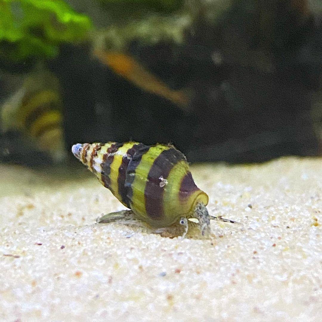 animal, aquarium, and article image