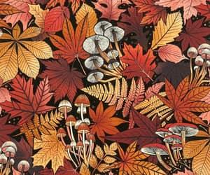 art, colours, and mushroom image