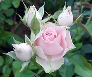 Photo shared by flower_igers on October 21, 2021 tagging @iliadakaiodysseia.