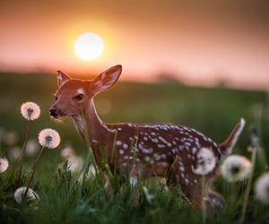 Another cute fawn at sunrise 🥰  Good Morning y'all_photo by@kolean_mike  Twitter