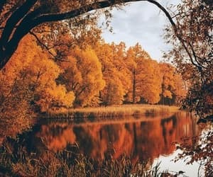 autumn, decoration, and crispy image
