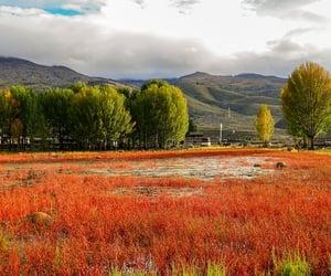 china, nature, and grass image