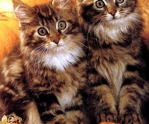 animals, cute cats, and beautiful image
