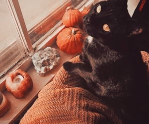 aesthetic, cute, and black cats image