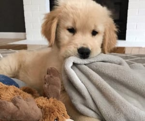dog, pup, and puppy image