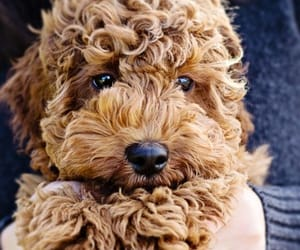 adorable, dog, and pup image