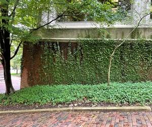 brick wall, bricks, and tree image