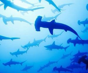 animal, blue, and shark image