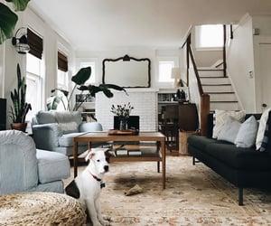 decor, dog, and home image