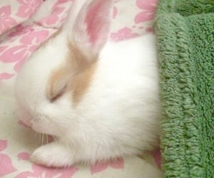 bunny, soft, and rabbit image