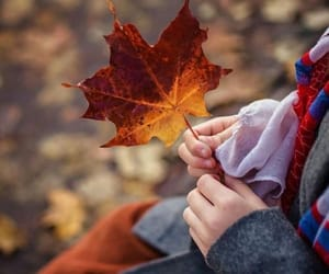 autumn, fall, and autumn leaves image