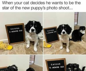 ego cat, cauyga pup, and white n black pets image