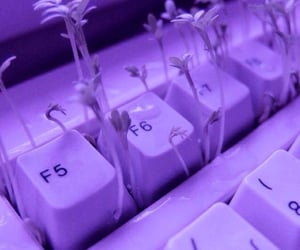 aesthetic, keyboard, and nature image