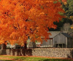 Fall colors in the country
