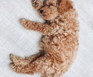adorable, aesthetics, and animals image