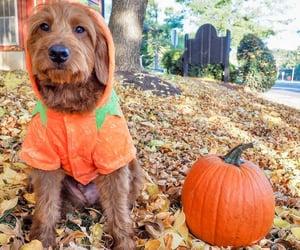 Puppy And Pumpkin