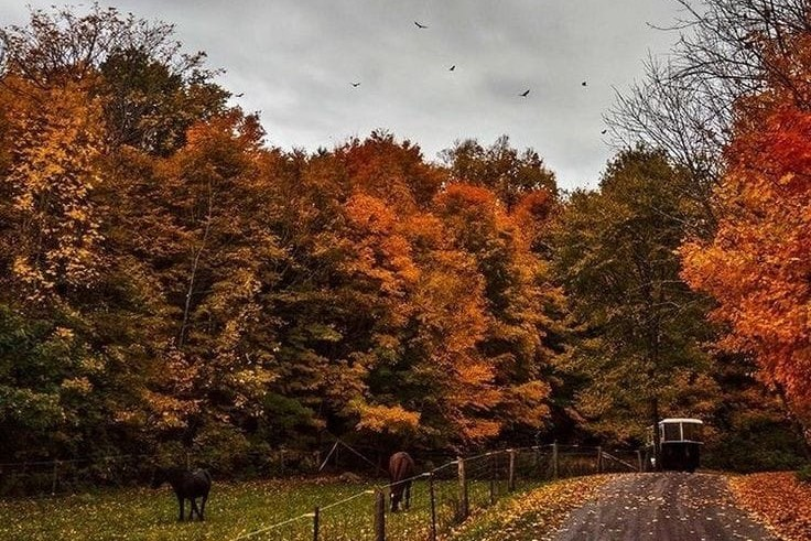 article, cosy season, and autumn image