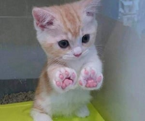 adorable, cute, and animal image