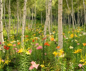 forest, japan, and lilies image