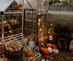 #autumn #colors #orange #cat #peacefull #weheartit #walpapper #september #pinterest #fall #october