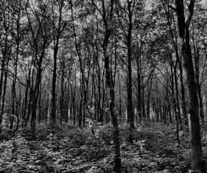 autumn, walking, and woods image
