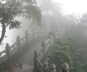 pale, nature, and fog image