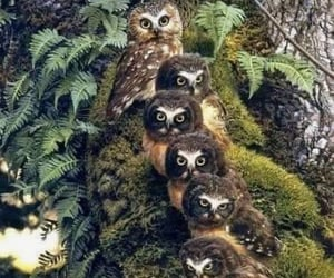 Owl with chicks