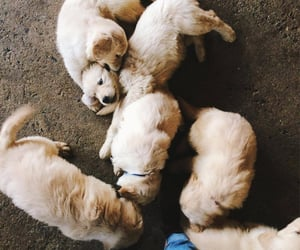 puppy, animals, and dog image