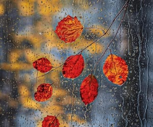 fall, leaves, and rain image