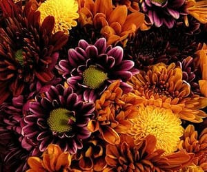 fall and flowers image