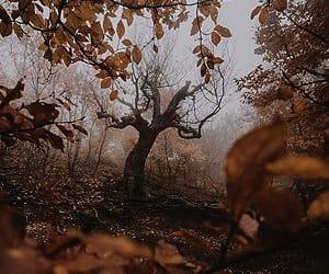 autumn, inspiration, and nature image