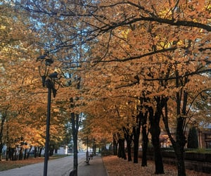 autumn, Montenegro, and orange image