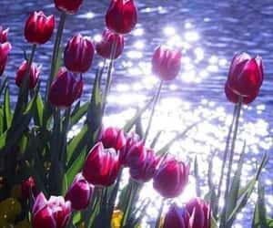 exteriores, primavera, and flores image
