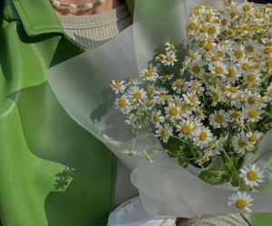 flowers, coffee, and green image