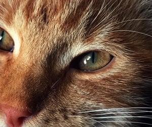 aesthetics, cat, and hazel image