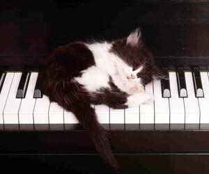 Pianos 🎹 kitty 😺.
