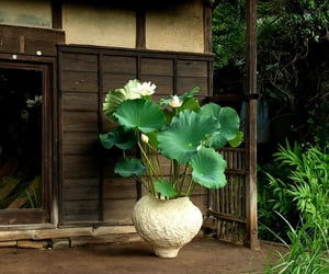 lotus flower and nature image