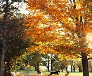 dogs, autumn, and fall image