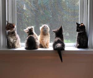 Little Paw Club