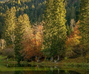 autumn, italy, and val vanali image