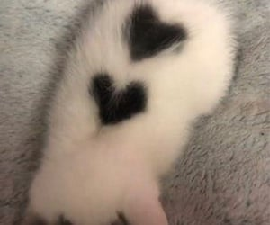 cat with hearts