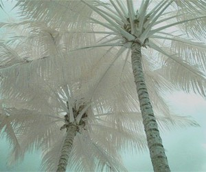 palm trees and white image