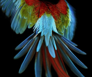 bird, parrot, and colors image