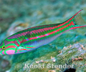 fish, neon, and psychedelic image