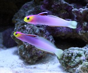 fish, purple, and neon+fish+ image