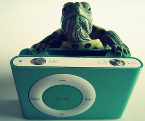 explore, ★, and green turtle ipod animal funny cute image