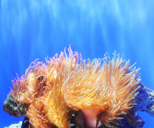 blue, photography, and corals image