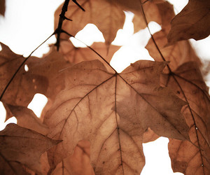 light, autumn, and leaves image